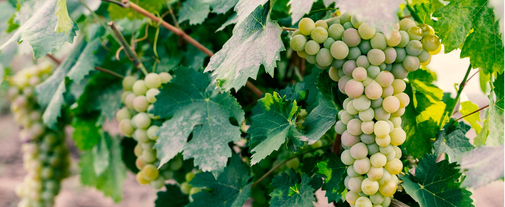 Pour Another Glass: How Customer Loyalty Can Move The Wine Industry Forward